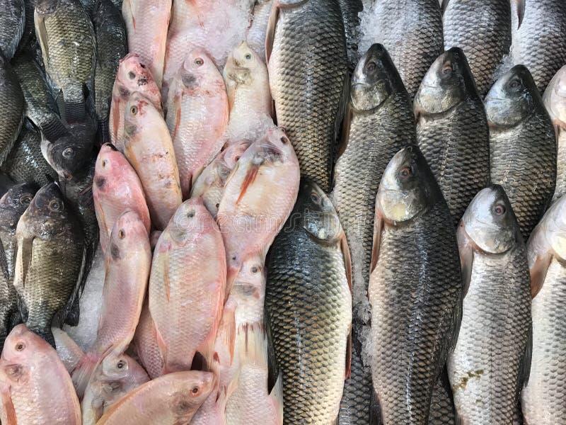 新鲜的湖水鱼 库存图片