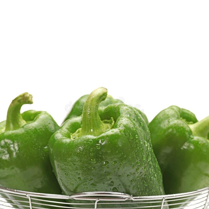 新鲜的湿绿色甜椒 免版税图库摄影