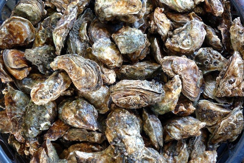 新鲜的牡蛎待售 库存图片