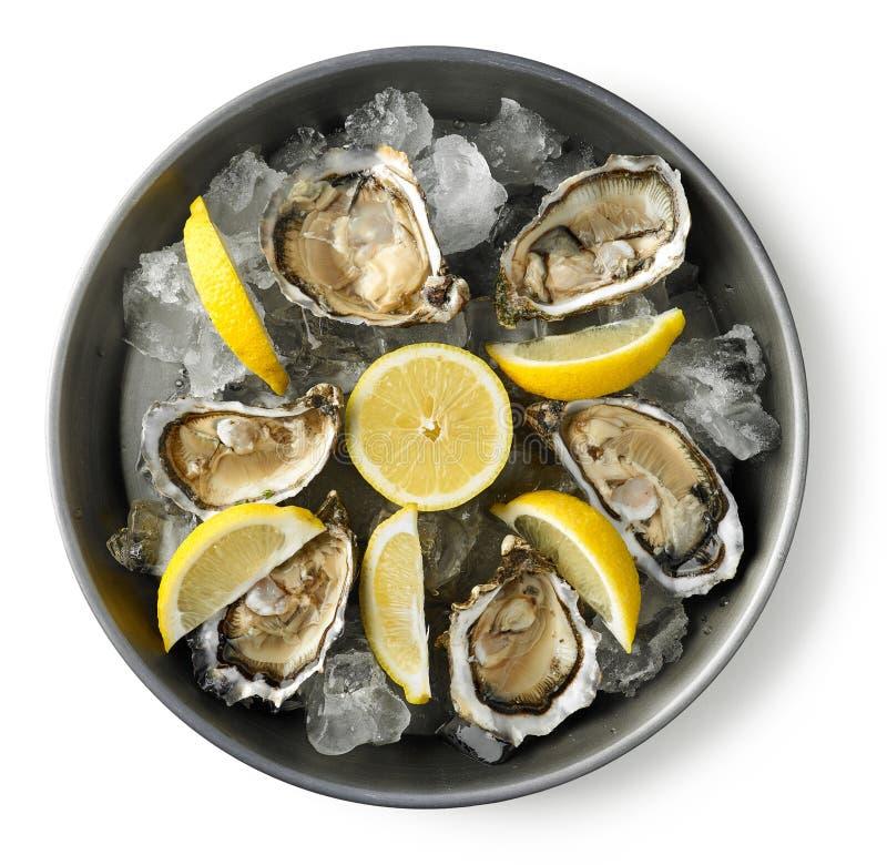 新鲜的牡蛎板材在白色背景的 图库摄影