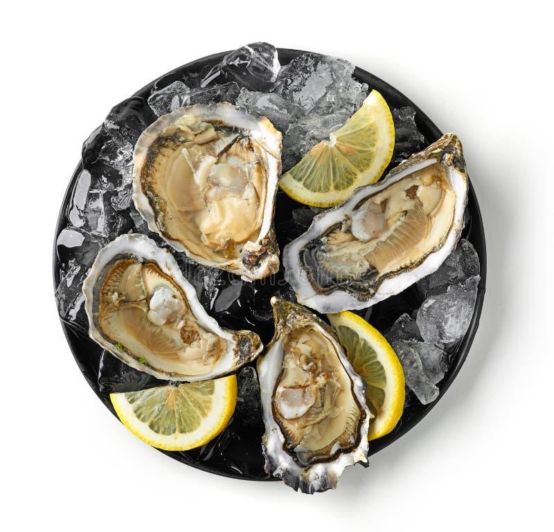 新鲜的牡蛎板材在白色背景的 免版税库存图片