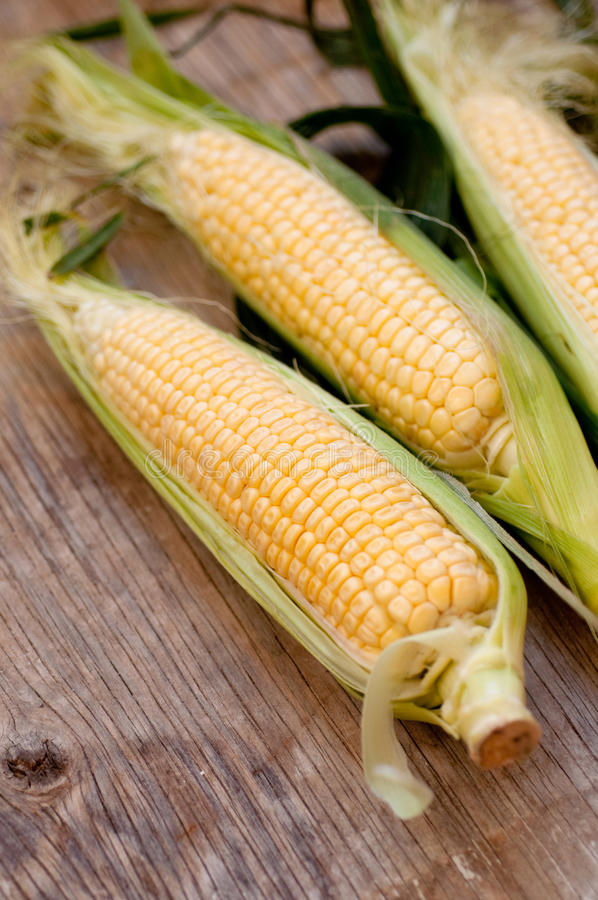 新鲜的玉米 图库摄影