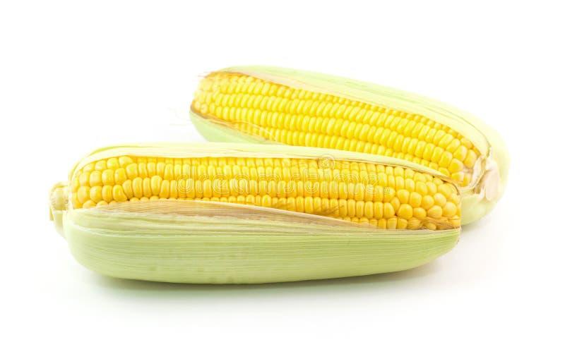 新鲜的玉米 免版税库存照片