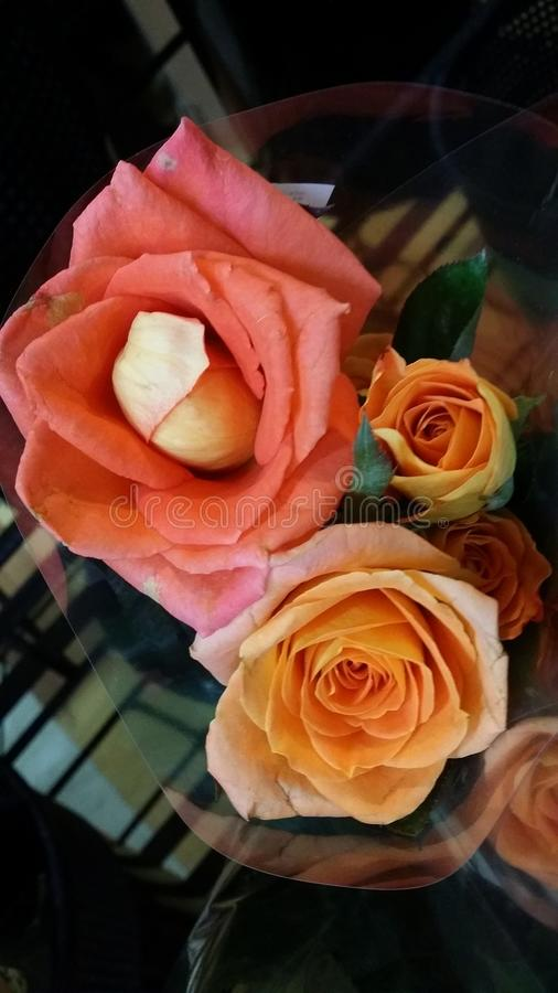 新鲜的玫瑰 图库摄影