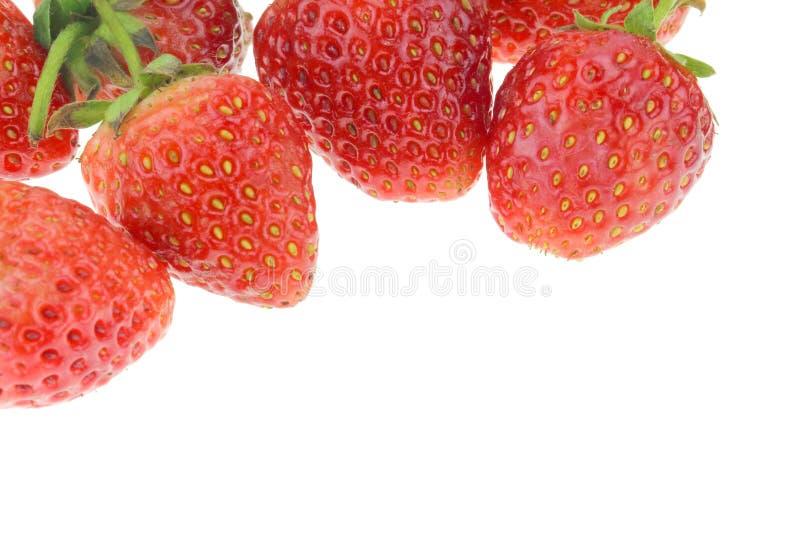 新鲜的理想的成熟草莓 免版税图库摄影