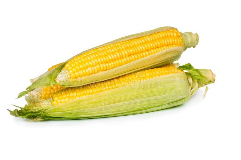 新鲜的甜玉米 免版税图库摄影
