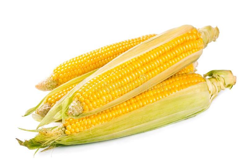 新鲜的甜玉米 库存照片