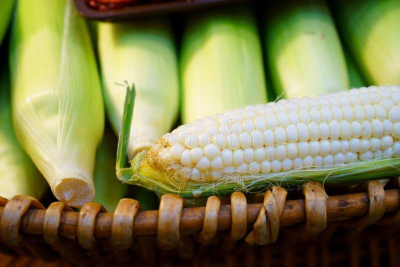 新鲜的白色甜玉米年轻玉米棒从有机庭院的 库存图片