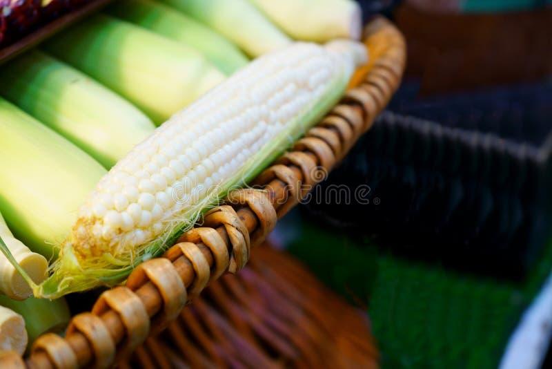 新鲜的白色甜玉米年轻玉米棒从有机庭院的 免版税库存图片