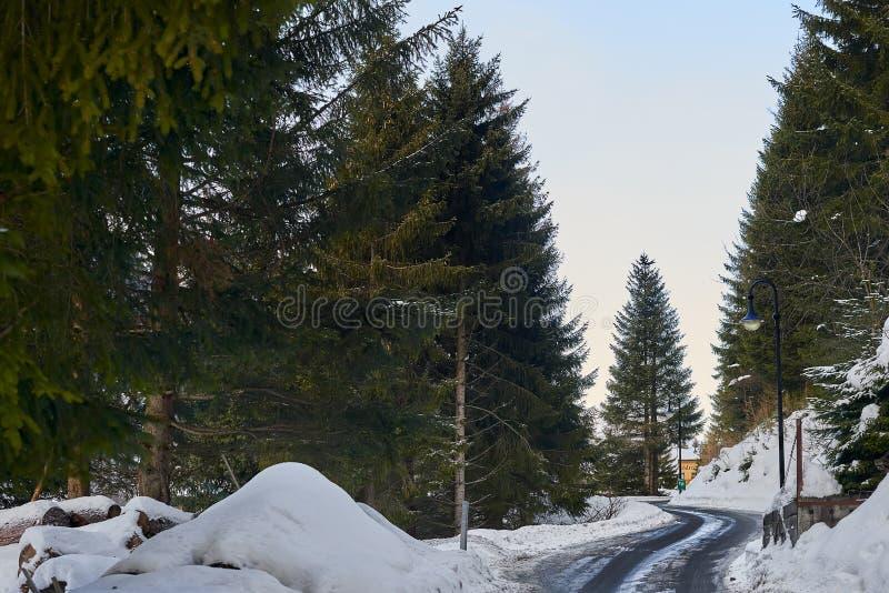 新鲜的白色雪盖的冬天森林,蒂罗尔阿尔卑斯 免版税库存照片