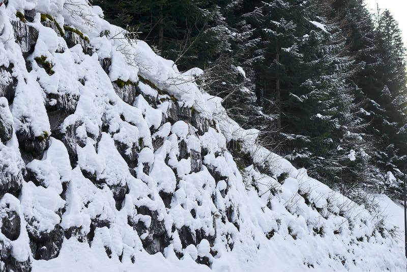 新鲜的白色雪盖的冬天森林,蒂罗尔阿尔卑斯 免版税库存图片