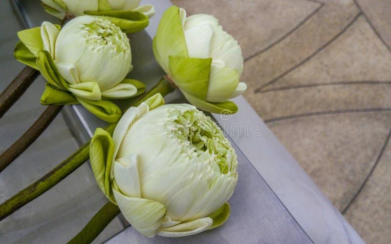 新鲜的白莲教花束菩萨的 用菩萨的祷告 免版税库存照片