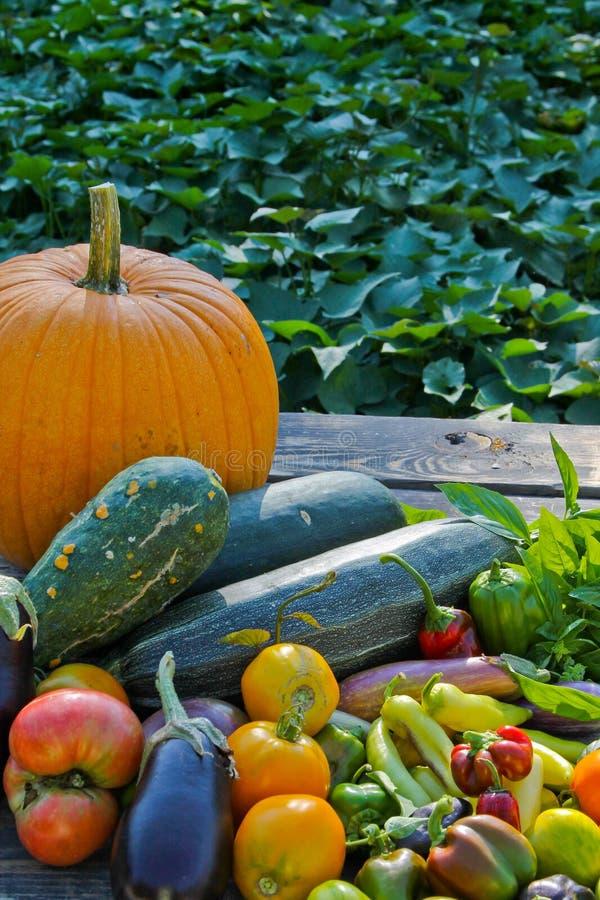 新鲜的秋天素食者 库存照片