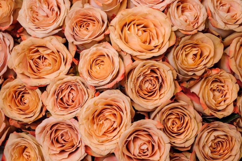 新鲜的米黄橙色玫瑰的背景图象 花纹理 库存图片