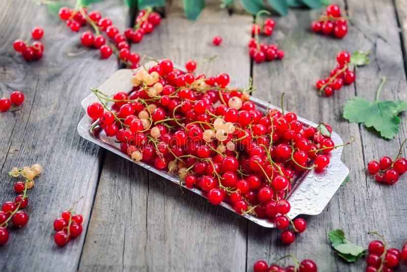 新鲜的红色当前莓果用水在土气木桌上的金属盘子滴下 夏天vegitarian饮食 农夫收获co 库存照片