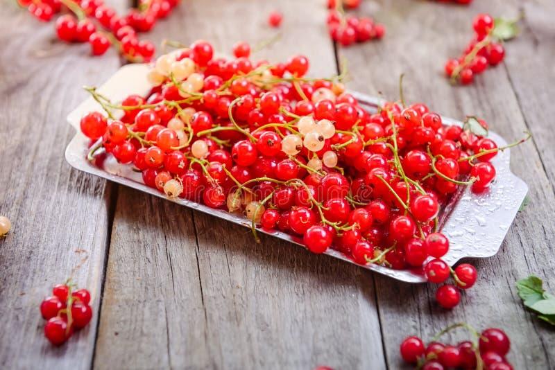新鲜的红色当前莓果用水在土气木桌上的金属盘子滴下 夏天vegitarian饮食 农夫收获co 库存图片