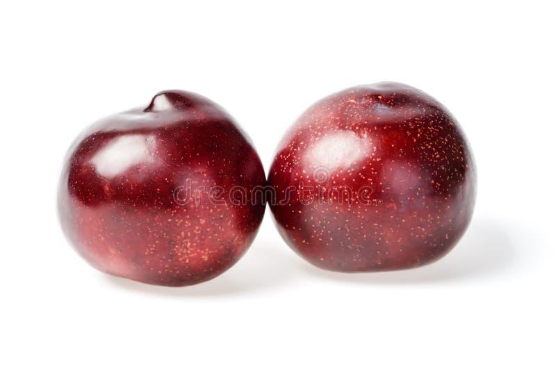 新鲜的红色李子 免版税图库摄影