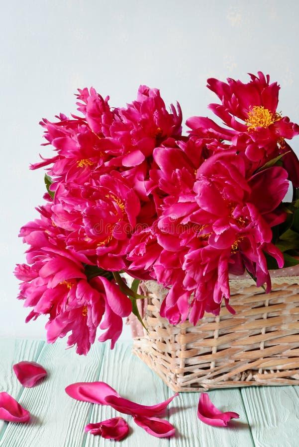 新鲜的红色牡丹,伯根地牡丹花束在轻轻地蓝色背景的 图库摄影