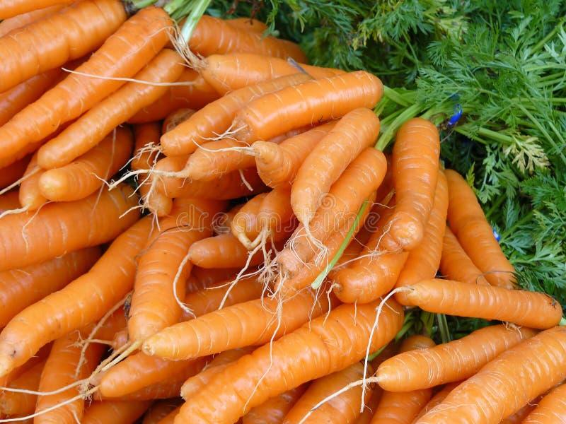 新鲜的红萝卜 免版税图库摄影