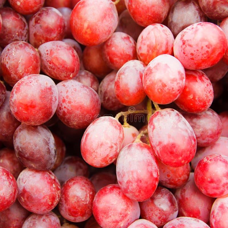 新鲜的红葡萄 免版税库存图片