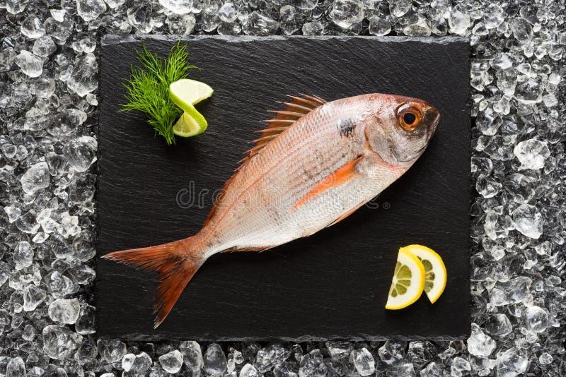 新鲜的红鲷鱼在一块黑石板材钓鱼 免版税库存图片