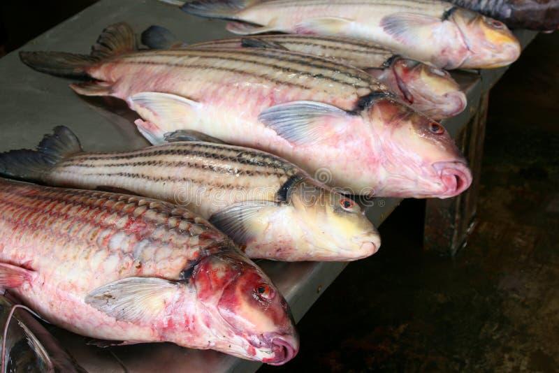 新鲜的红鲷鱼在市场上 免版税库存照片