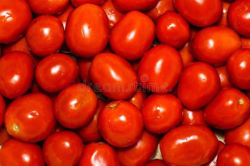 新鲜的组蕃茄 背景食物系列蕃茄 很多新鲜的蕃茄 与许多红色蕃茄ripes的夏天背景,红色水多 免版税库存图片