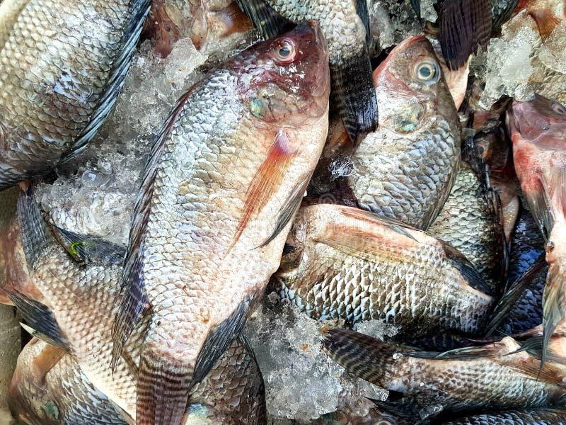 新鲜的结冰的鱼在新鲜市场上 免版税库存照片