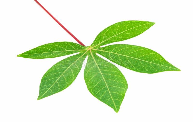 新鲜的绿色叶子极端特写镜头  库存图片