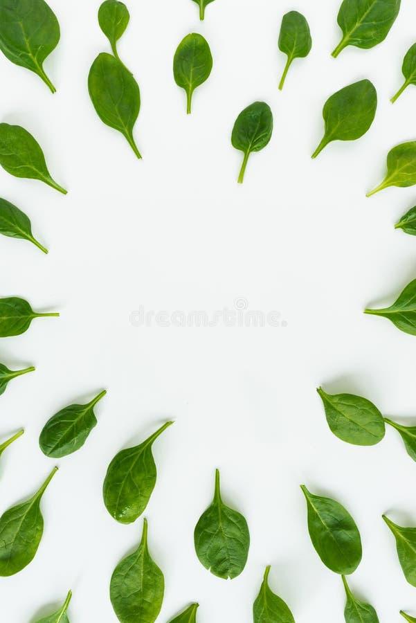 新鲜的绿色叶子菠菜、在白色背景隔绝的切片黄瓜和姜 在图象边界的菜  免版税库存图片