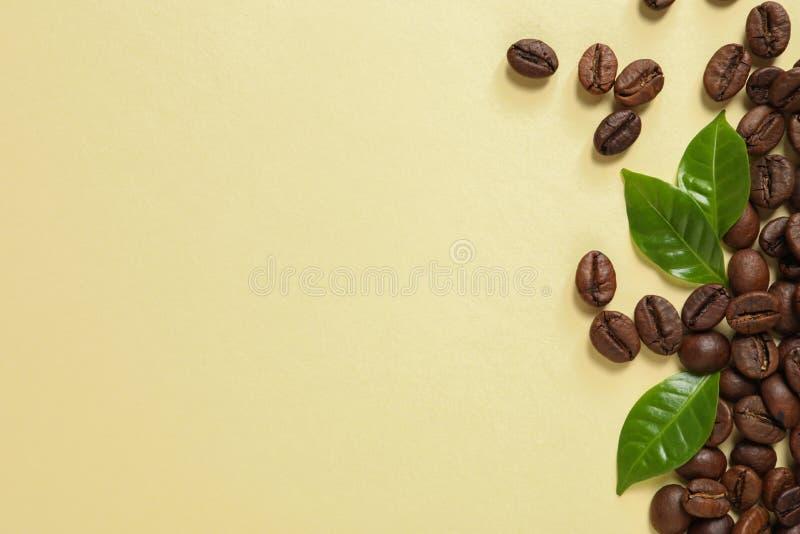 新鲜的绿色咖啡叶子和豆在淡黄色背景,平的位置 免版税库存照片