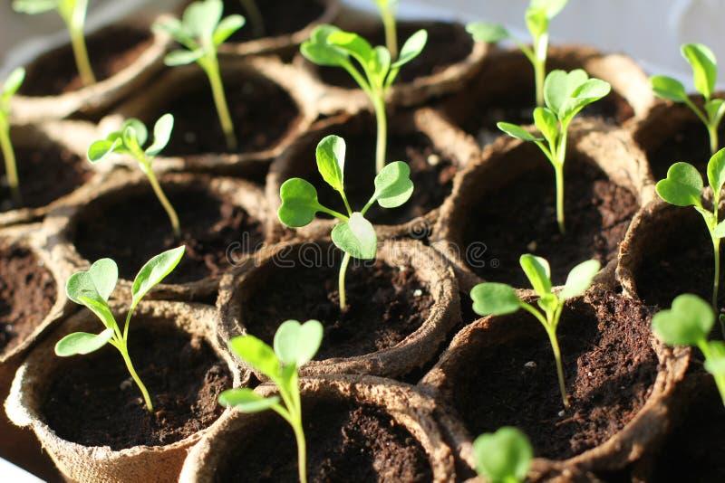 新鲜的绿色幼木 图库摄影