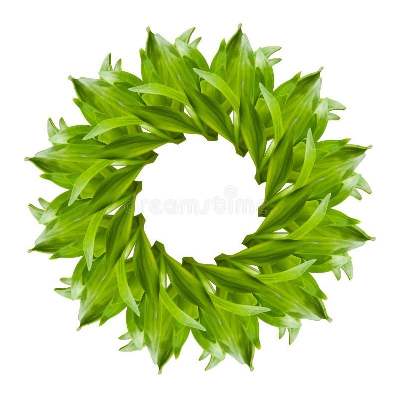 新鲜的绿色百合拼贴画在白色背景离开 库存照片