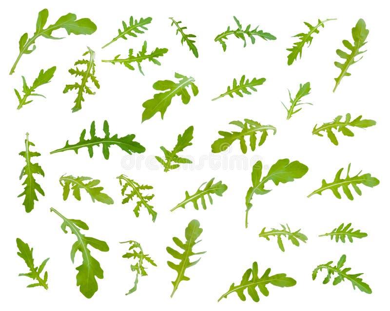 新鲜的绿色芝麻菜离开在不同的角度在白色backgrou 免版税库存图片