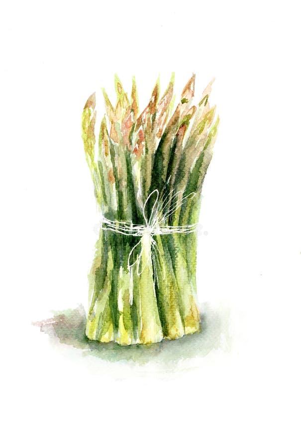 新鲜的绿色芦笋 向量例证