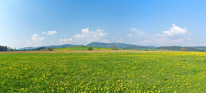 新鲜的绿色草甸 库存照片