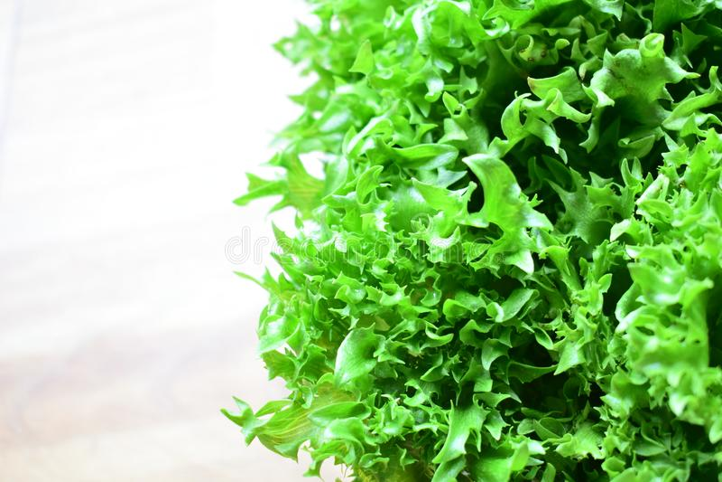 新鲜的绿色镶褶边的冰山 免版税库存照片