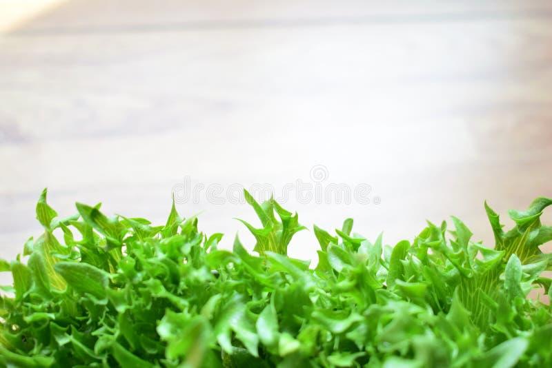 新鲜的绿色镶褶边的冰山 免版税库存图片