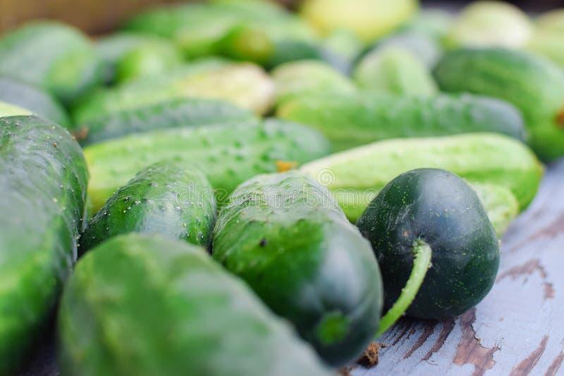 新鲜的绿色黄瓜收获在桌上 免版税库存照片