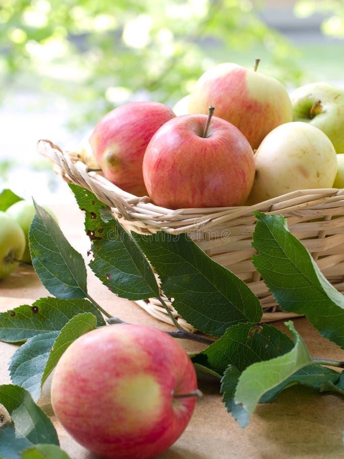 Download 新鲜的苹果 库存图片. 图片 包括有 茶点, 发光, 生活方式, 果子, 生气勃勃, bataan, 厨房 - 15696181