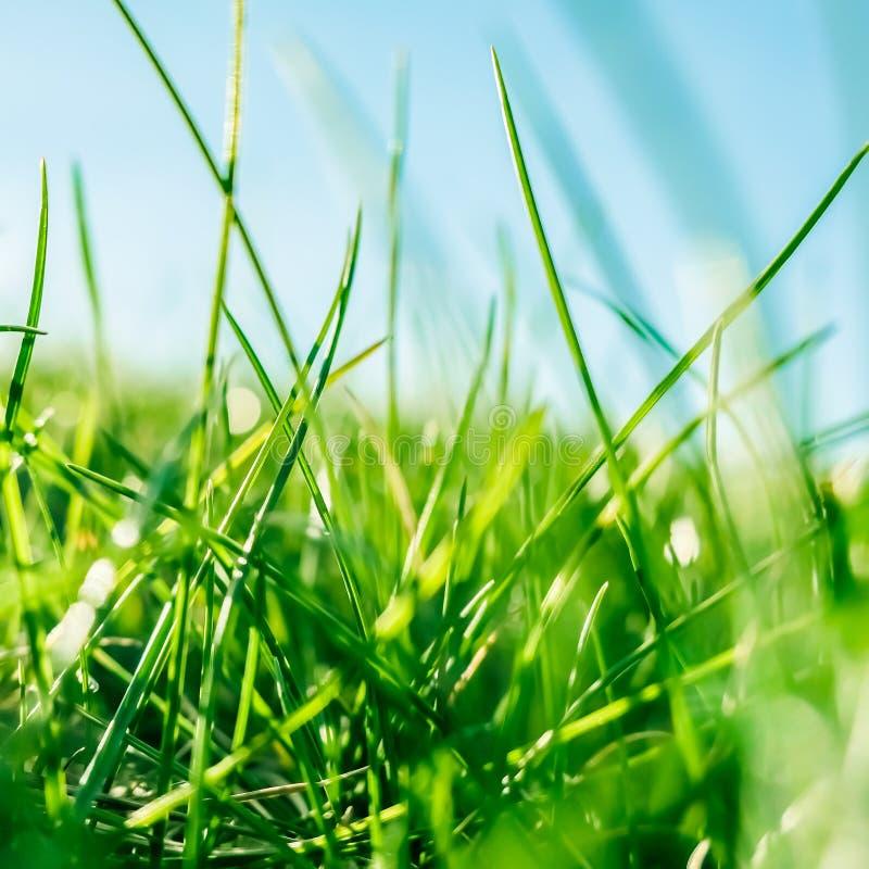 新鲜的草和晴朗的天空蔚蓝在一个绿色领域在日出,乡下的本质 免版税库存照片