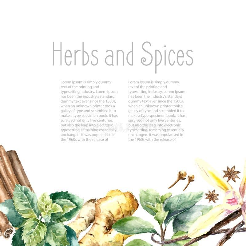 新鲜的草本和香料的水彩汇集 库存例证