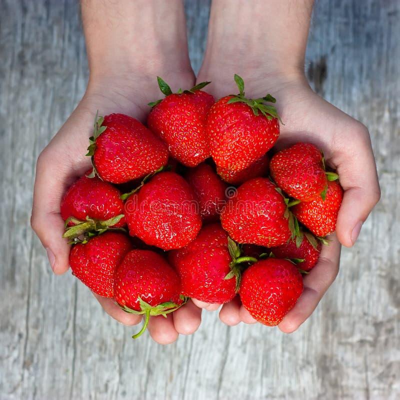 新鲜的草莓在男性手上 图库摄影