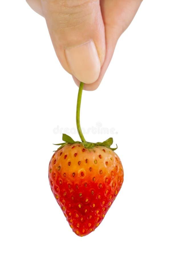 新鲜的草莓在白色背景隔绝的妇女手上 Brot 免版税库存图片