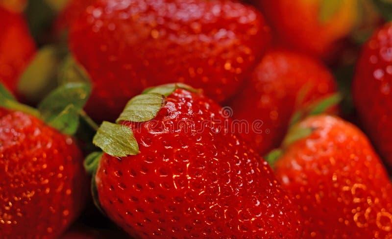 新鲜的草莓是甜,鲜美和滋补的 免版税图库摄影