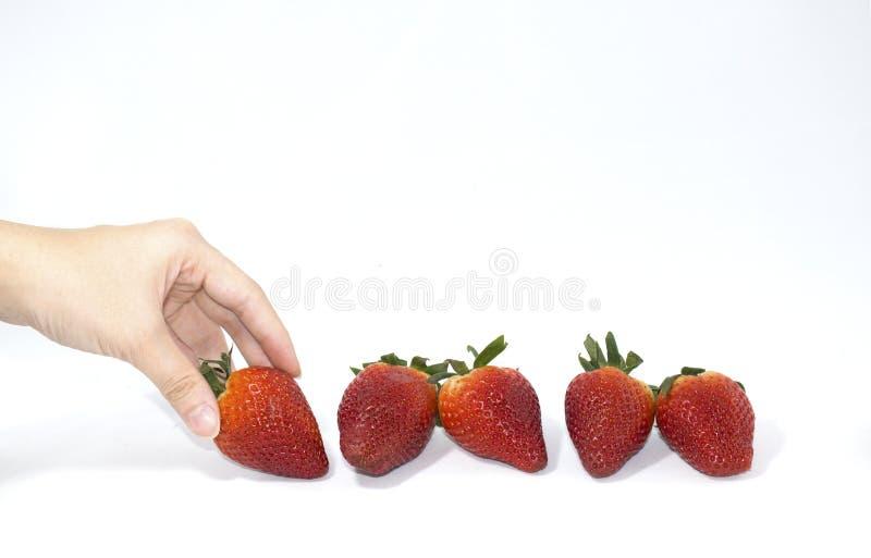新鲜的草莓用妇女手在背景中 免版税图库摄影