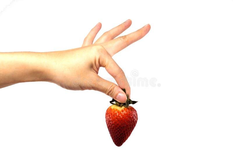 新鲜的草莓用妇女手在被隔绝的背景中 免版税库存图片