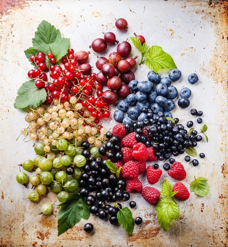 新鲜的莓果的混合与叶子的 免版税库存图片