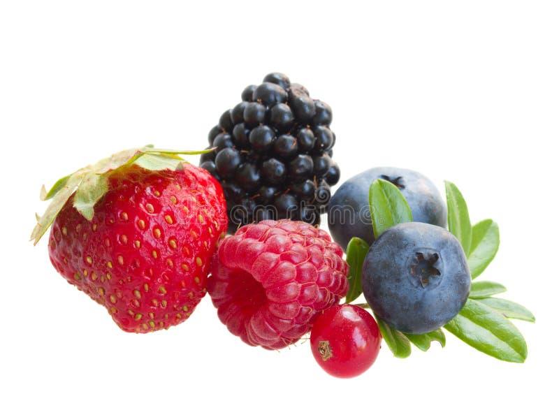 新鲜的莓果的混合 免版税库存图片