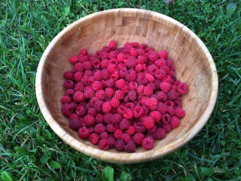 新鲜的莓 免版税库存图片